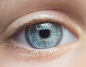 Lipid aids healing of scratches on the cornea